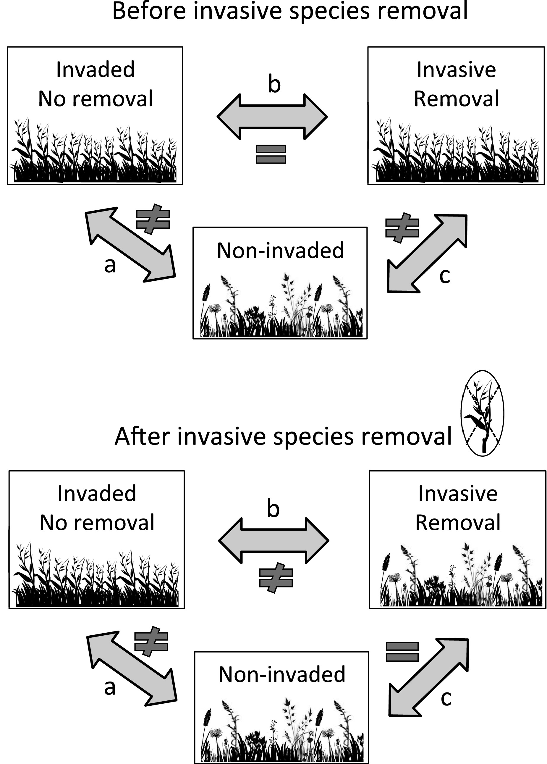 Invasive plant removal: assessing community impact and