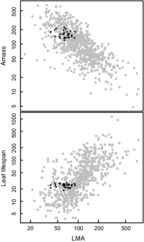 Leaf life span and the leaf economic spectrum in the