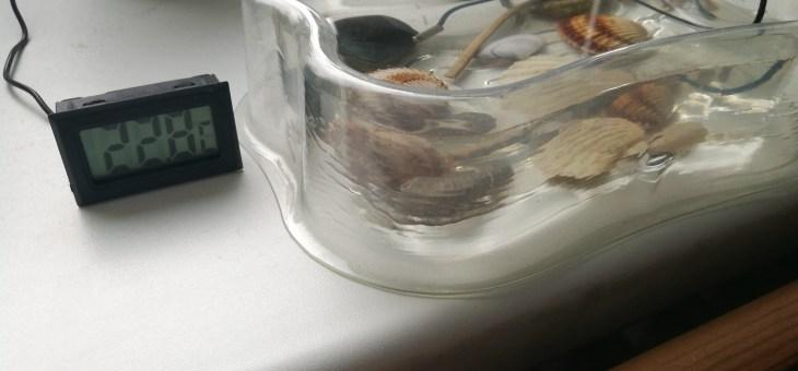Žábronožka solná (Artemia salina)