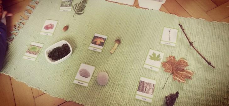 Podzim… předměty z přírody a karty