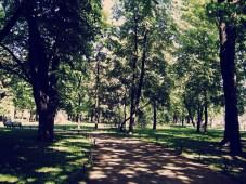 st-petersburg-forest