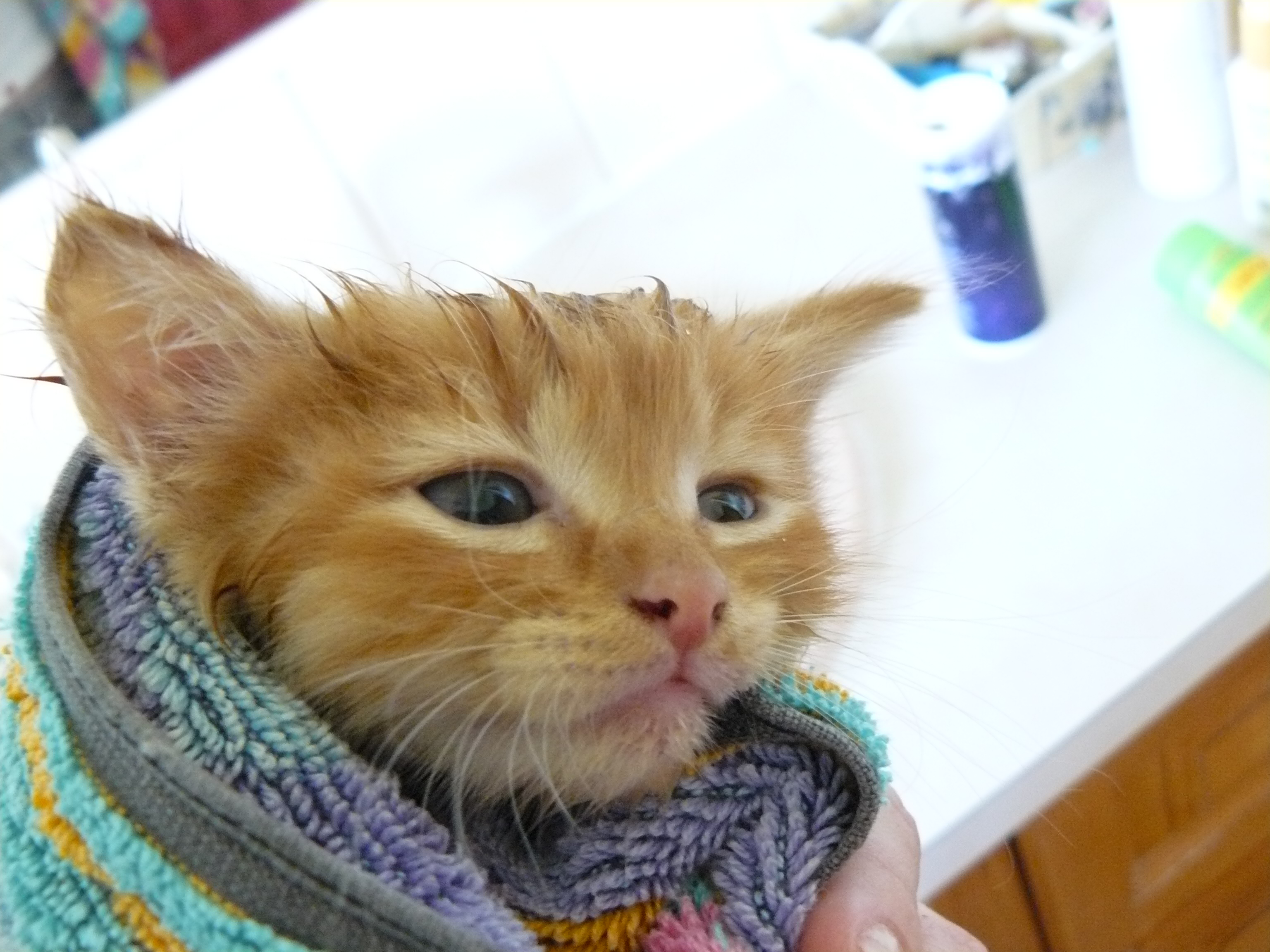 Ginge after his bath