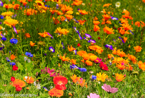 August Blumen fotografieren  besserefotoswordpresscom