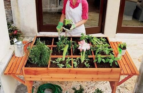 Ein ökologischer Gemüsegarten In Der Stadt? Besser Gesund Leben
