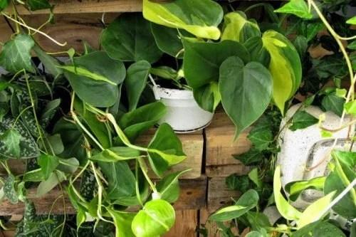 5 gefhrliche Zimmerpflanzen  Besser Gesund Leben