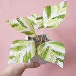 crepe paper plant by Bess Paper Goods