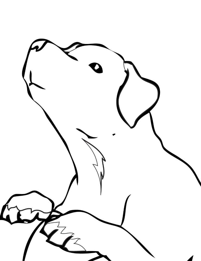 Golden Retriever Coloring Pages To Download And Print For Free
