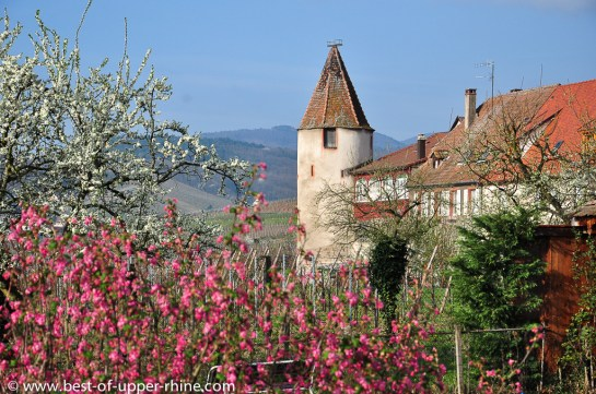 Saint-Hippolyte on the Alsace Wine Route