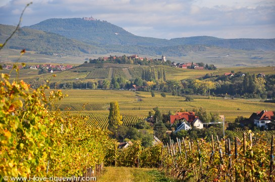 Alsace Wine Route - Vineyards near Colmar