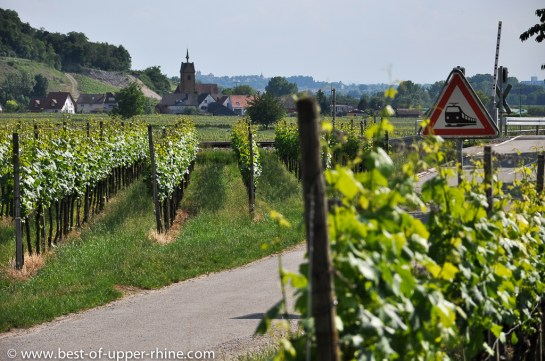 Vineyards in the Kaiserstuhl, near Freiburg, Germany