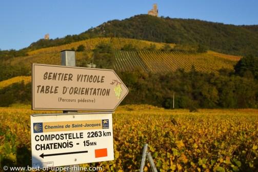 Ortenbourg medieval castle overlooking the Rittersberg vineyards.