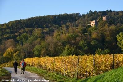 Hiking through the vineyards in Kintzheim