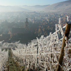 Schoenenbourg vineyard of Riquewihr in Winter