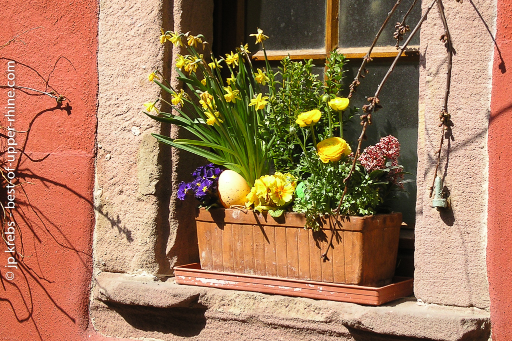 Spring flowers on a window
