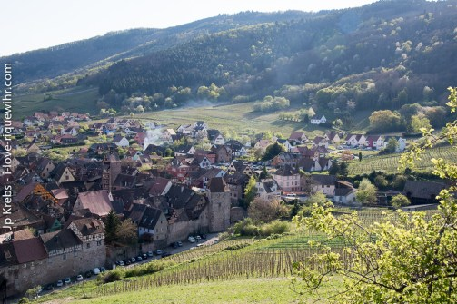 Riquewihr between vineyards, mountain and forest.