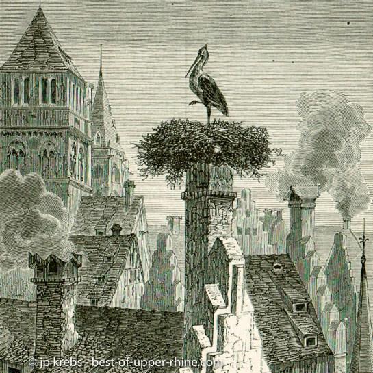 Stork on the rooftops of Strasbourg.