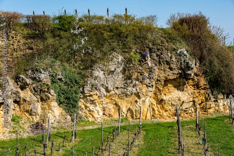 Limestone rocks in Mittelbergheim.