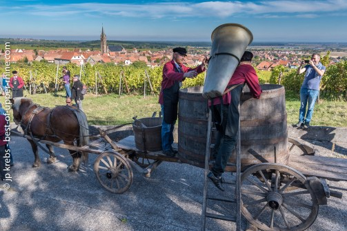 The village of Dambach-la-ville in the background. Harvester loading the grapes with a wooden pannier