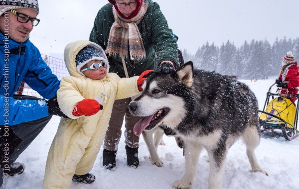Baby cadling a sled dog at the Lac Blanc ski resort