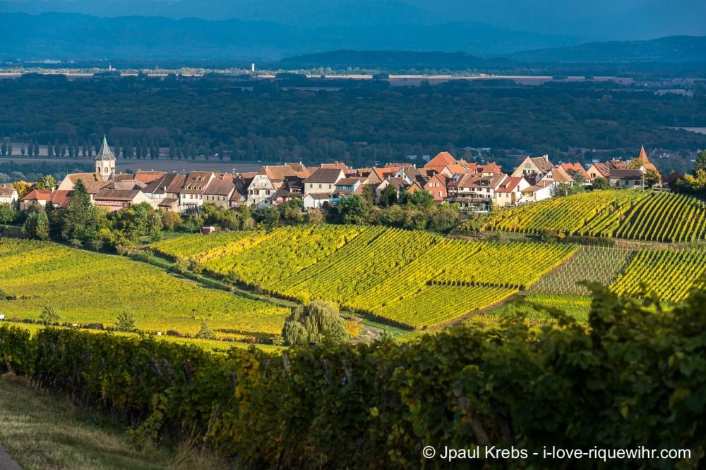 zellenberg-vignoble-automne-19oct16-1602