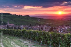 Riquewihr, Alsace - Sunrise in Summer