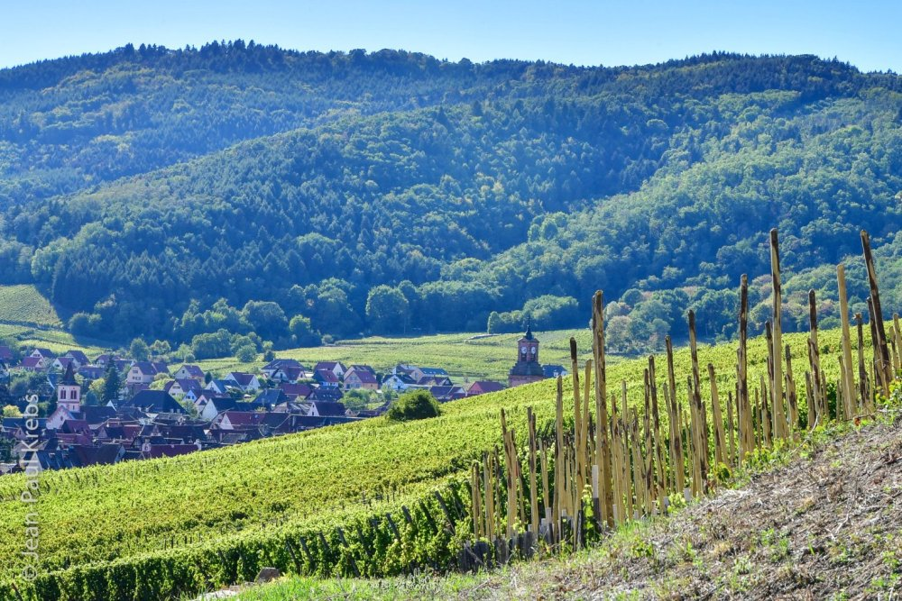 Riquewihr nestled between vineyards and mountains