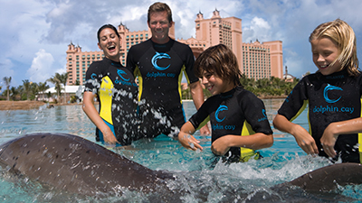 caribbean dolphins fun kids children