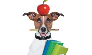 1514140849 can dogs eat strawberries apples and grapes - Can Dogs Eat Strawberries, Apples and Grapes?