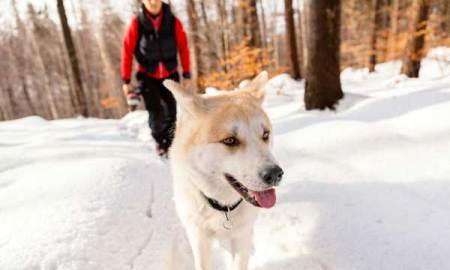 1514726830 7 ways to turn walking the dog into a workout - 7 Ways to Turn Walking the Dog Into a Workout