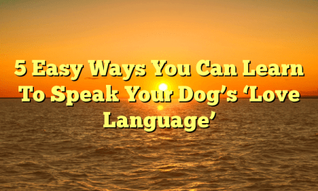 5 Easy Ways You Can Learn To Speak Your Dog's 'Love Language'