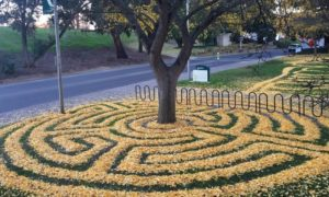800x420 1513124289 - Counselor At Sacramento State University Arranges Fallen Leaves Into Works Of Art