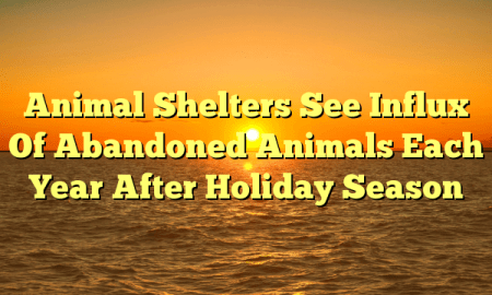 Animal Shelters See Influx Of Abandoned Animals Each Year After Holiday Season