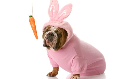 Can Dogs Eat Carrots And Corn