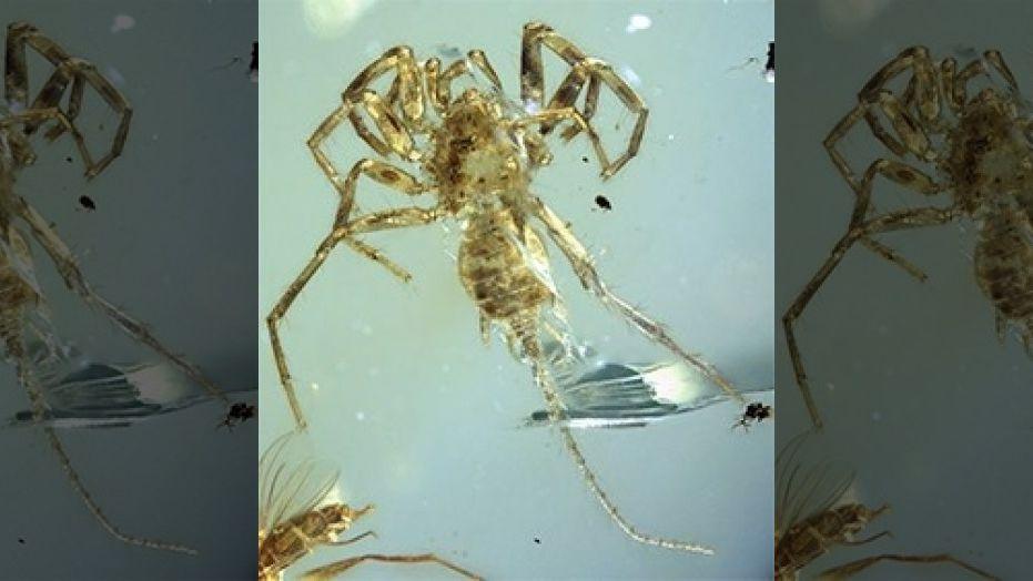 The entire specimen in dorsal ventral view. (Credit: University of Kansas)
