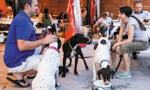 1519092537 how cane rosso restaurant is helping rescue dogs - How Cane Rosso Restaurant Is Helping Rescue Dogs