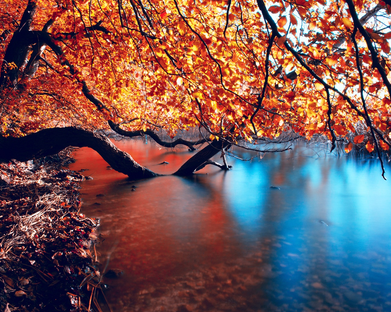 Fall Mountains Hd Wallpaper Pictures Wallpaper The Fall Of The Mangrove Forests And Tranquil