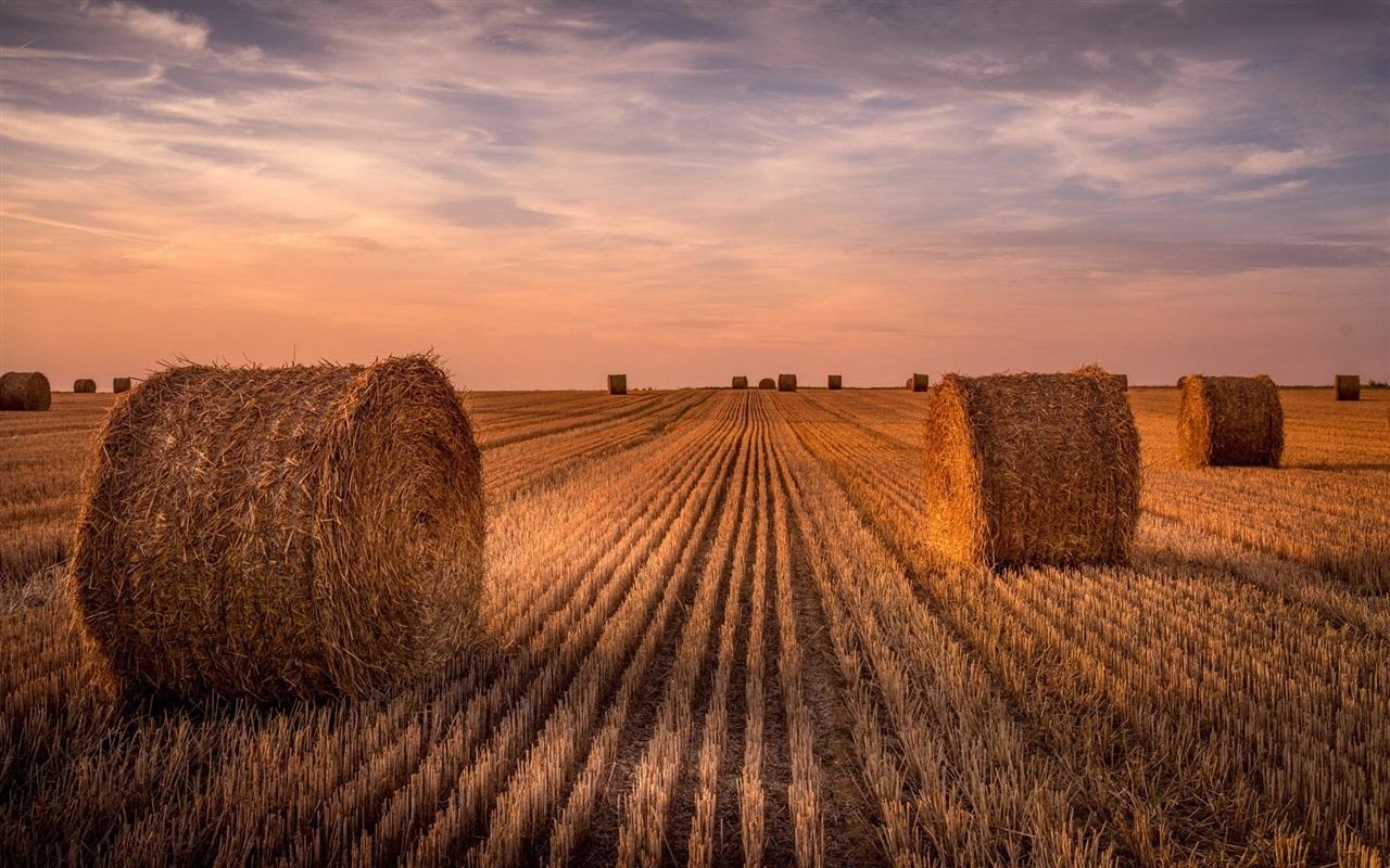 Fall Hills Wallpaper Wallpaper Wheat Field Hay Summer Sunset 1920x1200 Hd