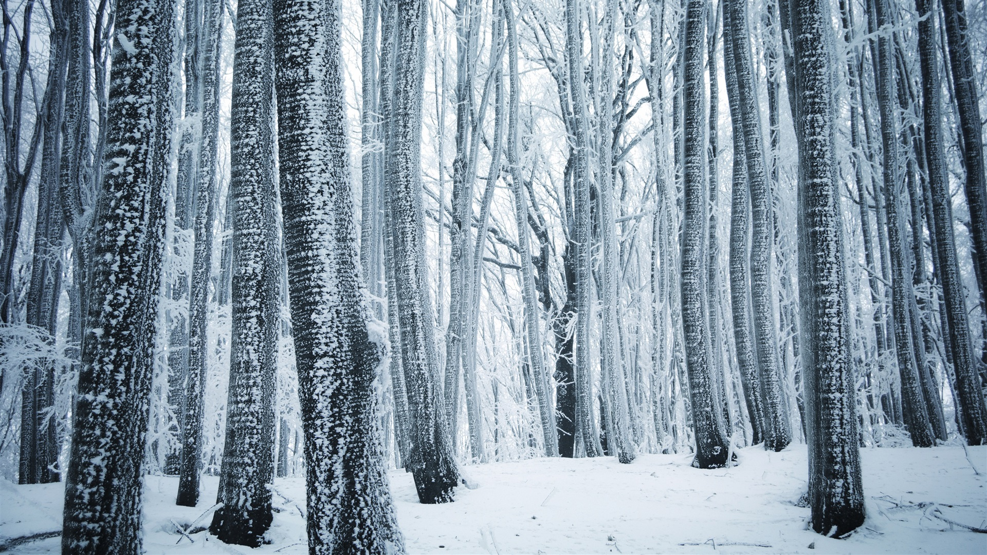 Iphone 5s Stock Wallpaper Wallpaper Winter Forest Trees White Snow 3840x2160 Uhd