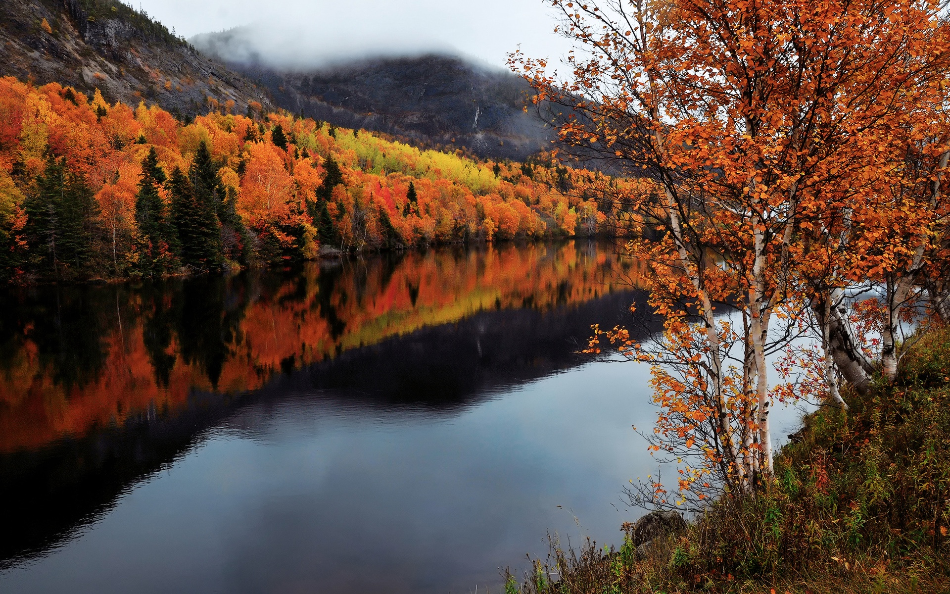 Fall Fields Wallpaper For Iphone Wallpaper Canada Newfoundland And Labrador Autumn Trees