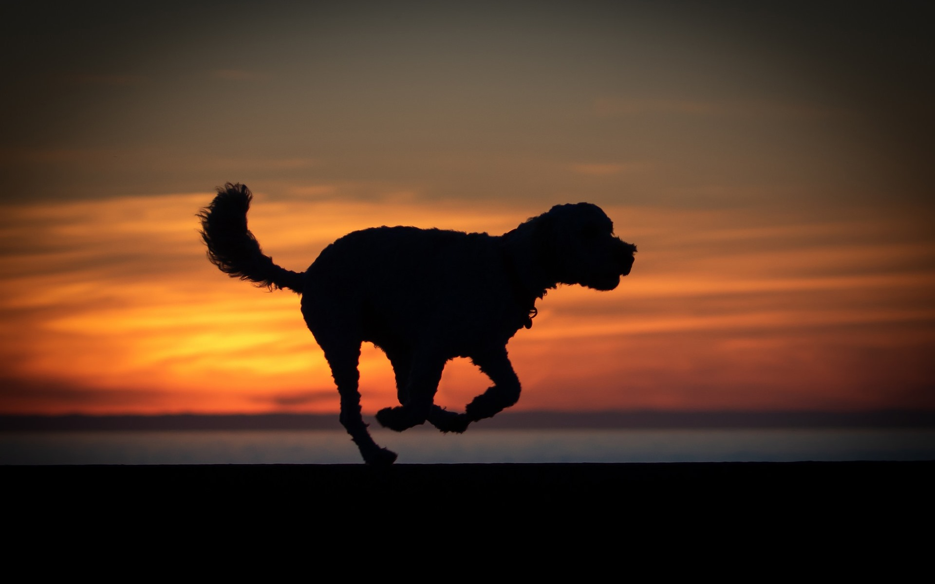 Cute French Bulldog Wallpapers Wallpaper Dog Run Silhouette Sunset 1920x1200 Hd Picture