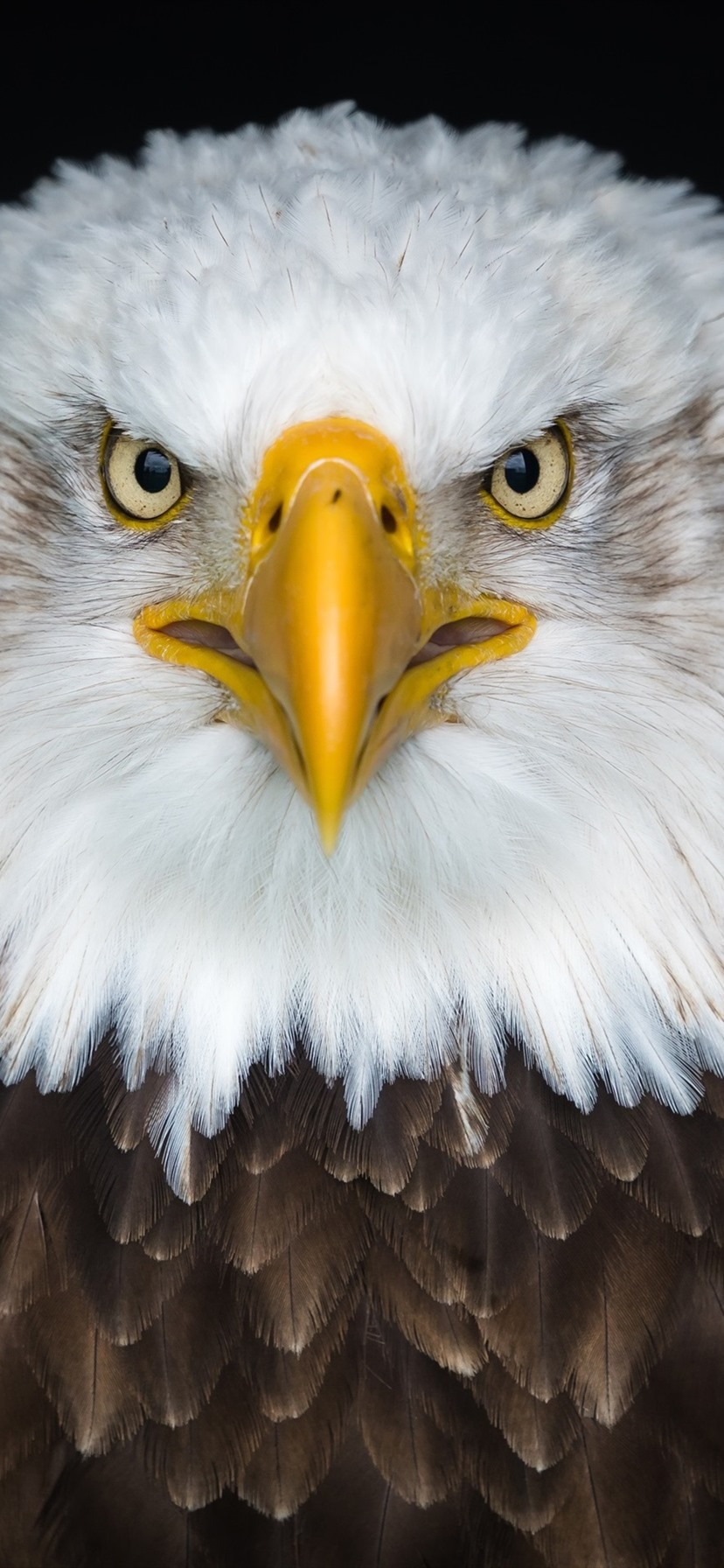 Summer Wallpapers For Iphone 7 Wallpaper Bald Eagle Front View Beak Eyes 3840x2160 Uhd