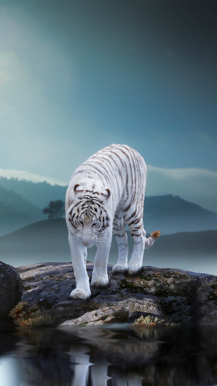 Cute Iphone 5c Wallpapers Wallpaper White Tiger Rocks Pond Fog Morning 1920x1200
