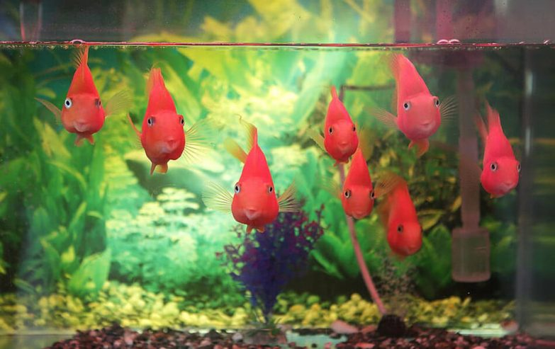 things to be considered before place the fish tank in the bedroom