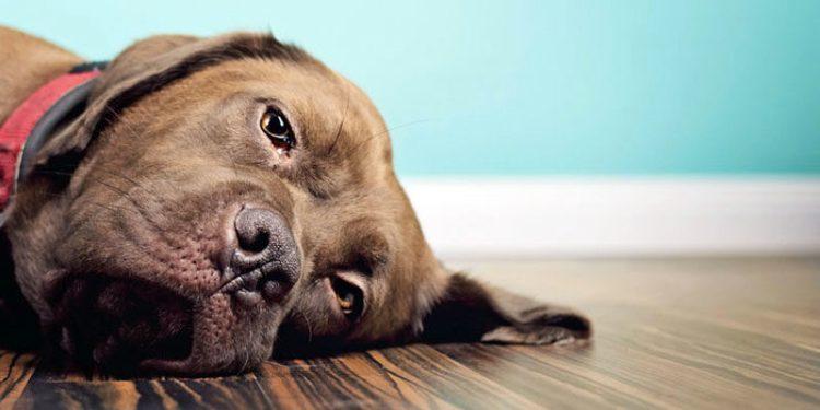 Cani e gatti: scopriamo come vivono un lutto per poterli aiutare a ...