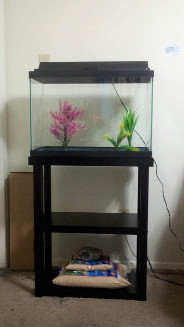 10 Gallon Fish Aquarium Stand Design Ideas