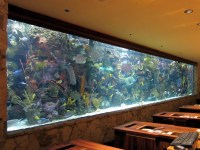 Big Tropical Fish For Aquarium | Aquarium Design Ideas