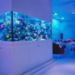 Aquarium Design Ideas | Best Aquarium Ideas