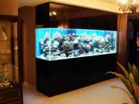 Fish For Wall Mounted Aquarium | Aquarium Design Ideas