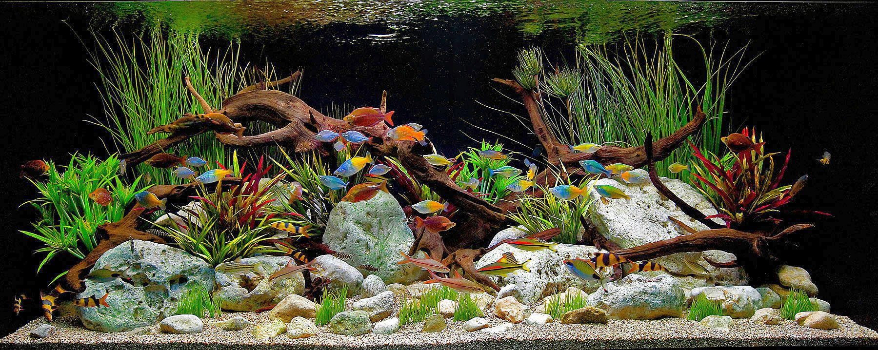 Freshwater Tropical Aquarium Fish