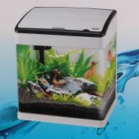 Small Aquarium Tropical Fish | Aquarium Design Ideas